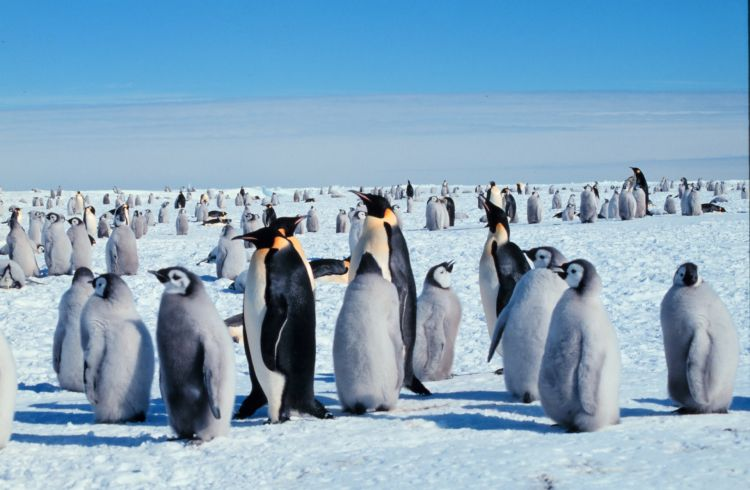 penguins_wikimedia_commons.jpg